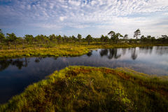 Sunny summer day in  swamp lake Stock Image