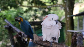 Sunny summer day on tropical island. Exotic birds. Tropical bird thailand samui island, white colour stock video