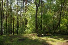 Sunny day walk view in the green spring forest. Sunny summer day walk view in the green spring forest royalty free stock image