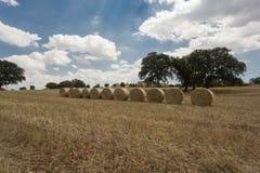 Sunny Summer Days In Puglia Itália do sul foto de stock
