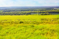 Sunny summer field royalty free stock photography