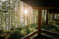 Sunny summer in a forest house in nature stock photography