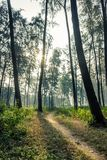 Sunny summer forest royalty free stock image
