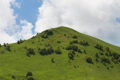 Sunny Summer Landscape con la colina y el prado con los árboles imagen de archivo libre de regalías