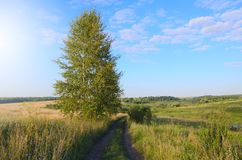 Sunny summer landscape with empty ground country road. stock image