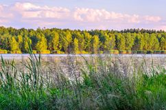 Sunny summer landscape. Green trees by the lake stock images