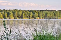 Sunny summer landscape. Green trees by the lake stock image