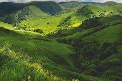 Sunny Summer Landscape mit Hügel und Wiese mit Bäumen stockbild