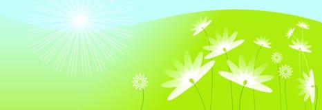 Sunny summer meadow illustration Royalty Free Stock Photo
