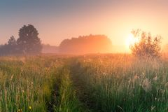 Sunny summer morning. Beautiful meadow with mist. Path in field Royalty Free Stock Photo