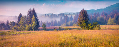 Sunny summer morning in the foggy Carpathian mountains Royalty Free Stock Photos