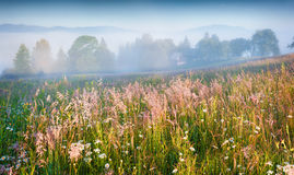 Sunny summer morning in the foggy mountain village Stock Photography