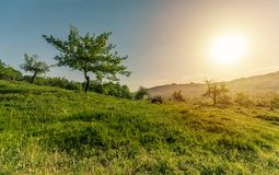 Cândești Deal, Dambovita - In the middle of the nature. How beautiful can this photo be described in words? If I had one, I would say `life`. This is royalty free stock image