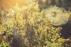 Close up of two spider web on sunny summer morning. stock photo