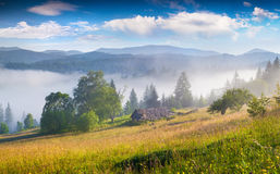 Sunny summer mourning in the foggy mountains Royalty Free Stock Photo