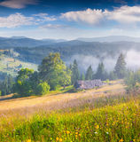 Sunny summer mourning in the foggy mountains. Stock Image