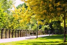 Sunny summer park Stock Photos