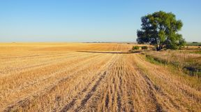 Sunny summer scene with empty rural field after harvesting a stock photography