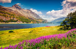 Sunny summer scene on the Silsersee lake Royalty Free Stock Image