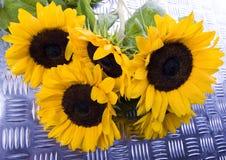 Sunny sunflowers Stock Photos