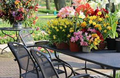 Sunny terrace with a lot of flowers Royalty Free Stock Photography