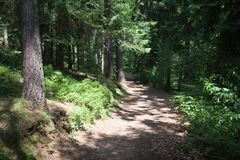 Sunny trail in a big forrest Royalty Free Stock Images