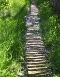 Sunny trail in fresh greenery in the garden, on rural street Stock Photography