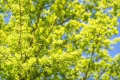 Sunny tree detail Stock Photography