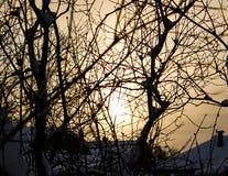 Sunny tree. Light of the sun through the tree Stock Image