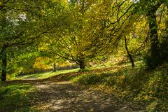 Tree-lined path in autumn bathed in dappled sunlight. Showing trees in autumn colors with back lit leaves and branches stock photography