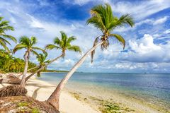 Sunny tropical beach in dominican republic royalty free stock images