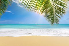 Sunny tropical beach with palm trees royalty free stock photo
