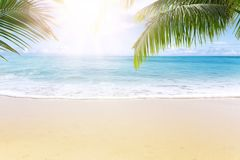 Sunny tropical beach with palm trees royalty free stock photos