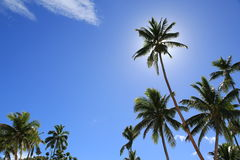 Sunny tropical day. With blue sky and palm trees Stock Photos