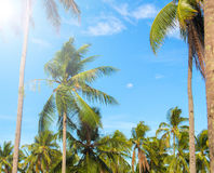 Sunny tropical landscape with coco palm trees. Exotic place view through palm tree silhouettes. Royalty Free Stock Images