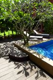 Tropical garden pool side. A photograph showing the beautiful sunlight and shadows of a tropical plumeria tree by the side of a blue swimming pool in a resort Royalty Free Stock Images