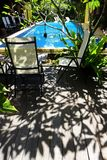 Tropical resort pool side. A photograph showing the beautiful sunlight and shadows of a tropical plumeria tree by the side of a blue hotel resort swimming pool Stock Photos