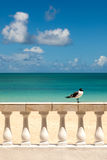 Sunny Tropical Seashore with Gull Sitting on Fence Royalty Free Stock Photography