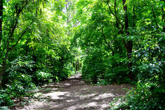 Sunny Tropical skog Royaltyfri Bild