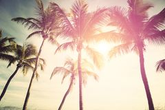 Sunny tropical sky Royalty Free Stock Images