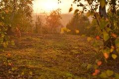 Sunny tundra Stock Images