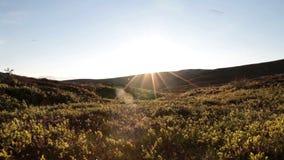 Sunny tundra landscape. Slider shot in a sunny tundra landscape in summer stock footage