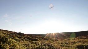 Sunny tundra landscape. Slider shot of a sunny tundra landscape in summer stock video footage