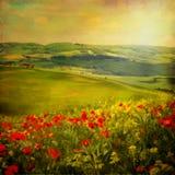 Sunny Tuscany. Royalty Free Stock Photography
