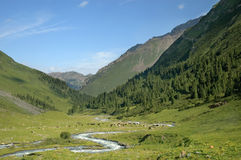 Sunny valley. Sunny Tien-Shan valley with cattle Royalty Free Stock Photos
