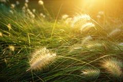 Sunny Vegetation Stock Photo