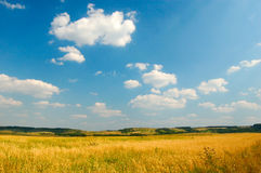 Sunny view on meadow. A summer outdoor scene, sky and clouds royalty free stock image