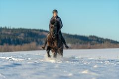Young Swedish woman riding her Icelandic horse in deep snow and sunlight stock photo