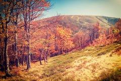 Sunny vintage autumn forest Stock Photos