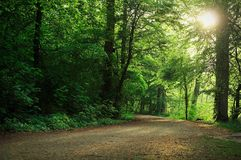 Sunny walking path in the forest. Frontal landscape view of a walking path in the forest under the afternoon sun Stock Image